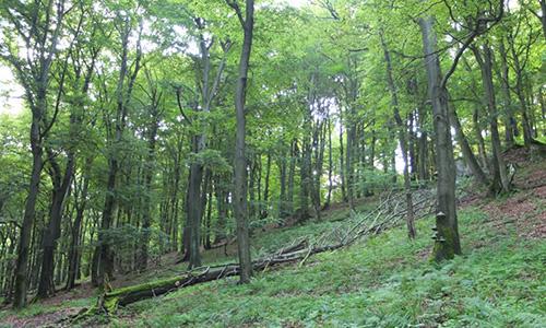 Foto Innenteil bestwig 19. Februar Vortragsreihe zu Wald und Forstwirtschaft in Bestwig