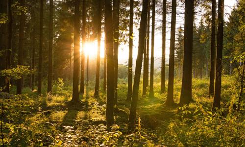 Gegenlicht im Fichtenwald Sportliches Naturerlebnis und nachdenkliche Stimmung auf dem A4