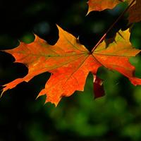 Herbstlaub-Impressionen (Foto: pixabay)