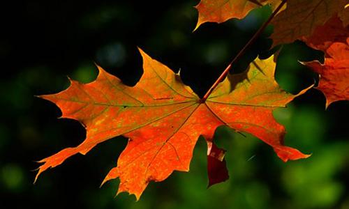 Herbstlaub innen 13. Oktober: Indian Summer Ranger Tour
