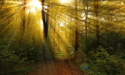 Herbstwald innen 24. Oktober: Waldlandschaften im Ebbegebirge