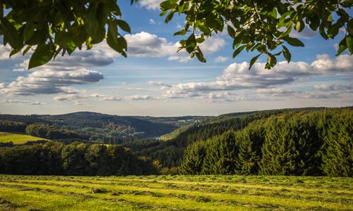 Impressionen des Ebbegebirges c Simone Rein 24. Oktober: Waldlandschaften im Ebbegebirge
