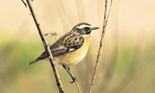 Innen Vogelkonzert und Frühjahrsblüher c Pixabay 17.05.2018 Vogelkonzert und Frühlingsblüher – Artenreichtum in der Kulturlandschaft