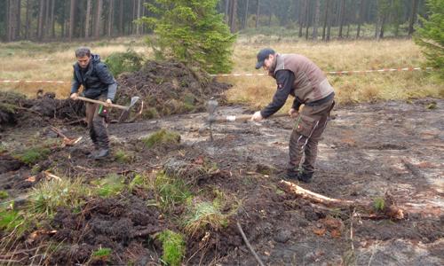 Innenteil Galmeigrasnelke 4. Starterprojekt des Naturparks Sauerland Rothaargebirge