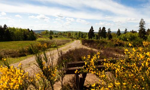 Nationales Naturerbe Trupbacher Heide heute ein Naturschutzgebiet mit besonderen Lebensräumen und seltenen Tier und Pflanzenarten Foto Tourismus NRW e.V. Hurra, hurra die Heide blüht