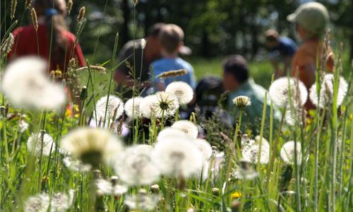 Naturwunder innen 17. Juli: Kinder Rangerwanderung