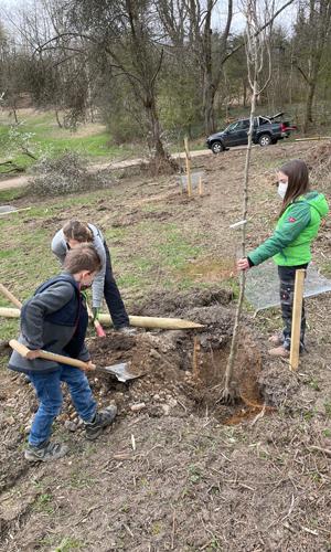 Neuenrade innen 2 Zukünftige Naturpark Schule pflanzt Bäume für Streuobstwiese