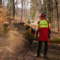 Ranger vom Landesbetrieb Wald und Holz bei Baumfällarbeiten (Foto: Klaus Peter Kappest)