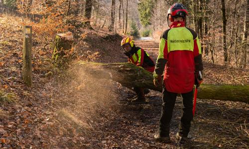Ranger vom Landesbetrieb Wald und Holz bei Baumfällarbeiten c Klaus Peter Kappest innen Gemeinsame Waldkampagne in den Startlöchern