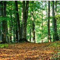 Vieles gibt es im Mischwald zu entdecken! (Foto: pixabay)