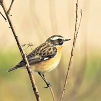 Vogelkonzert und Frühjahrsblüher (Foto: Pixabay)