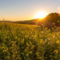 Immer wieder ein bezauberndes Erlebnis - der Sonnenaufgang (Foto: Naturpark Sauerland Rothaargebirge e.V.)