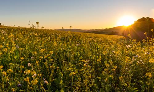 Sonnenaufgang innen Natur – auch in Krisenzeiten für eine Auszeit geöffnet