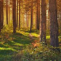 Wie verjüngt sich die Natur? Diese und viele weitere Fragen werden während dieser Tagestour über die Höhen Iserlohns beantwortet, die teils über steile Pfade führt (Foto: pixabay)
