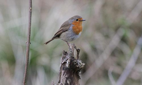Vogel Innenteil 20.05.2017: Vogelstimmenwanderung im Wetterbachtal