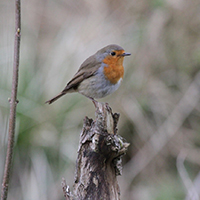 Vogelstimmenwanderung_Übersicht