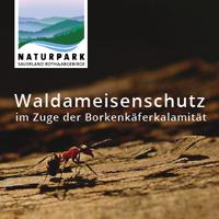 Durch die intensiven Waldarbeiten sind auch die schützenswerten und für das Ökosystem Wald wichtigen Waldameisen betroffen  (Foto: Naturpark Sauerland Rothaargebirge e.V.)