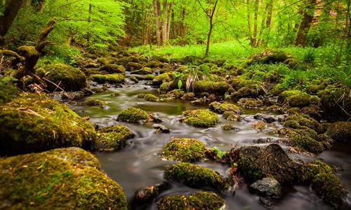 Waldbaden Entschleunigen Erleben mit allen Sinnen Bewusst wahrnehmen unterstützt einen gesunden Lebensstil Foto Burbach Niederdresselndorf Tourismus NRW e.V. Tanne statt Wanne