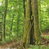 Den Alltag hinter sich lassen und die Ruhe des Waldes genießen (Foto: Marina Homrighausen)