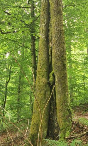 Waldbaden innen 01. Mai: Den Wald mit allen Sinnen erleben