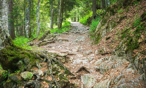 Waldwege Pfade innen 23. August: Mit traumhaften Ausblicken zum Stüppel