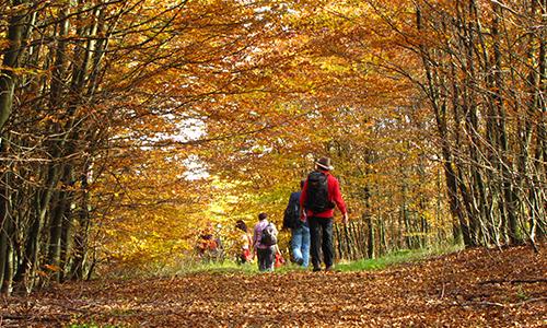 Wanderer im Herbst 07. Oktober: Indian Summer am Rothaarsteig