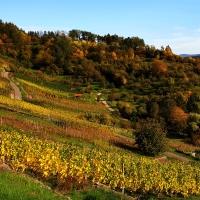 Herbstliche Weinwanderung © Heinz Giringer