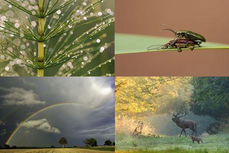 Collage 450x300 Vier Fotografen, vier Bilder, vier Eindrücke vom Naturpark Schönbuch