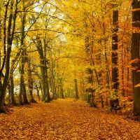 Goldener Herbstwald © Erich Tomschi