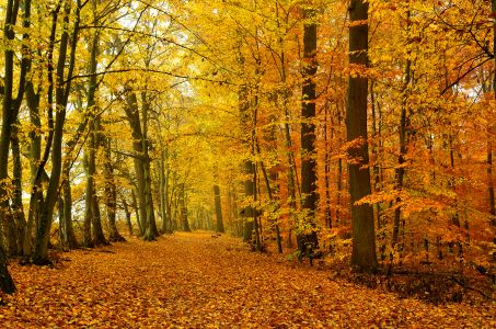 Foto des Monats Tomschi 453x300 Goldener Oktober im Naturpark Schönbuch