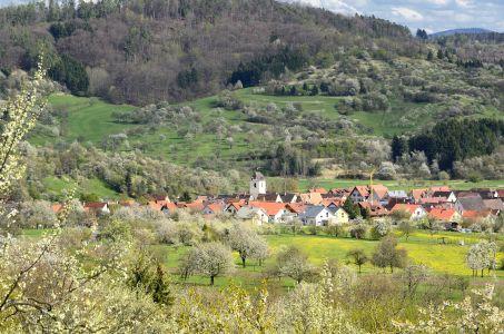 Foto2 300 Streuobstblüte im Naturpark Schönbuch
