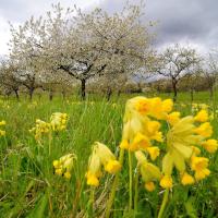 Frühling am Schönbuchrand zwischen Breitenholz und Kayh © Erich Tomschi