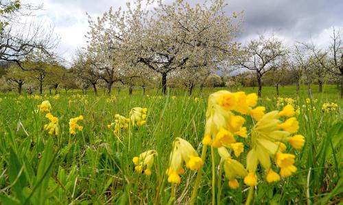 Frühlingserwachen ErichTomschi 500 300 Frühling im Naturpark Schönbuch