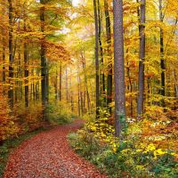 Herbstwald © Erich Tomschi