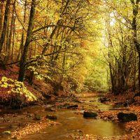 Goldersbach im Herbst © Erich Tomschi