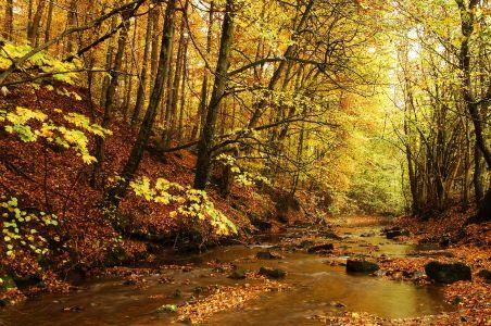 Naturpark Schönbuch Goldersbach im Herbst 452x300 Entlang des größten Bannwaldes im Naturpark Schönbuch