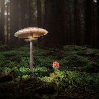 Magisch © Klaus Engel