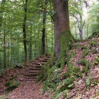 Stufen im Olgahain © Werner Schaal