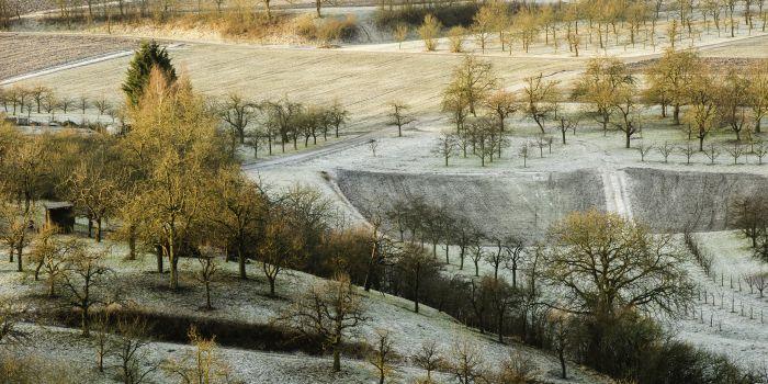 Streuobstwiesen bei Frost im Morgenlicht Schaal350 Streuobstwiesen bei Frost im Morgenlicht