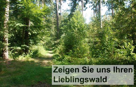 Vorderseite Postkarte 468x300 Bürgerbeteiligung bei der Waldplanung