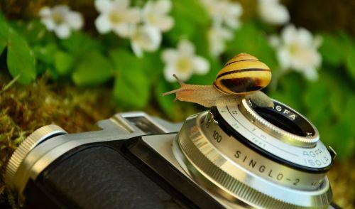 camera 1381663 960 720 500x295 Rezept für ein gelungenes Foto