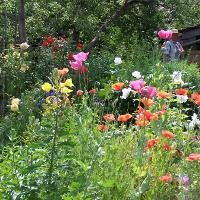 <Biologische Vielfalt- Naturschutz beginnt im Garten