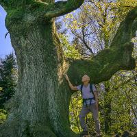 <Heilkräfte des Waldes – Waldbaden in Naturparken