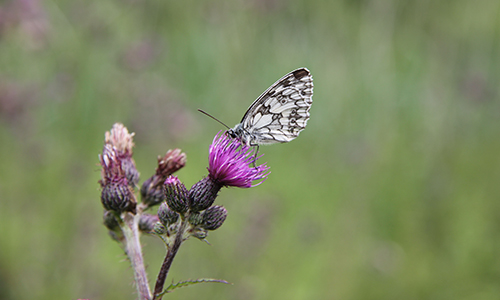 110709 Finsterrot 070 Naturschutztag 2018