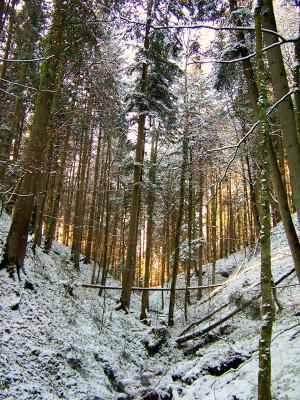121209 Koehler 300x400 Unterwegs mit den Naturparkführern im Dezember