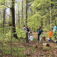 Natur-Erlebniscamp Wüstenrot Waldolympiade am Steinknickle