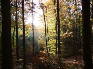 Geführte Wanderung mit Naturparkführerin Sabine Rücker
