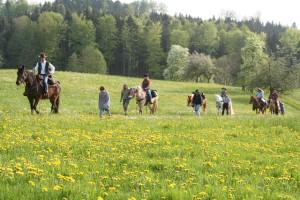 Naturpark aktiv - Auf dem Rücken der Pferde