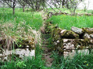 150426 NP aktiv Elsaesser 300x225 Naturpark aktiv   Wie aus dem Wengert die Streuobstwiese wurde