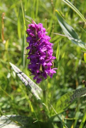 150514 block 300x449 Naturpark aktiv   Gibt es Orchideen bei uns?